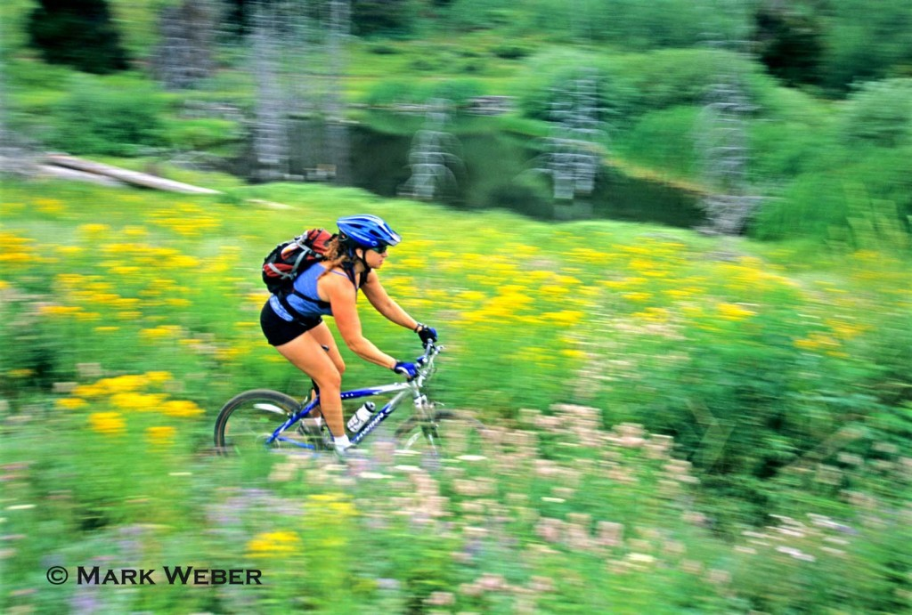 Tracey Weber mountain biking the Walstrom HollowTrail through the wildflowers which is located high in The Goose Creek Mountains of southern Idaho