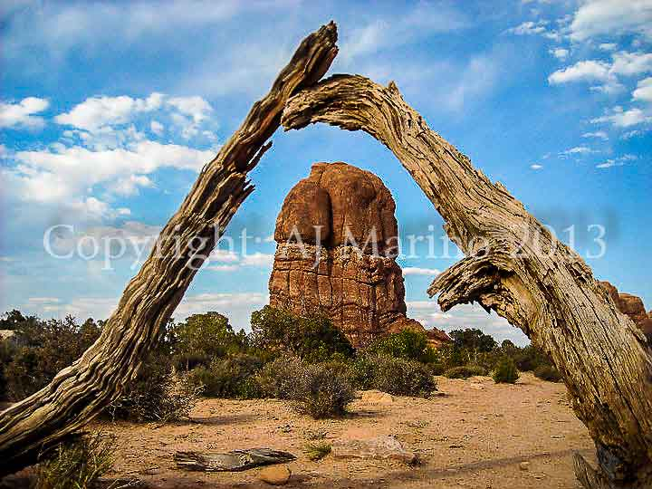 AJ Marino photo photography image of rock under dead wood in Arches National Park near Moab UT Utah