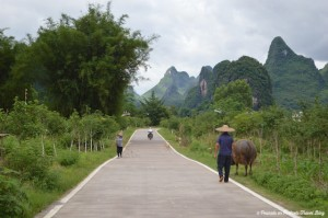Yangshou Countryside with Chinese farmers walking livestock