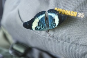 butterfly on the Mountainsmith Approach backpack