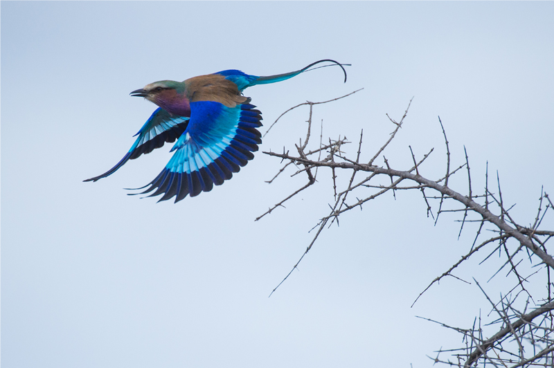 bird taking flight in Kruger National Park, South Africa, Andy Mann Photo