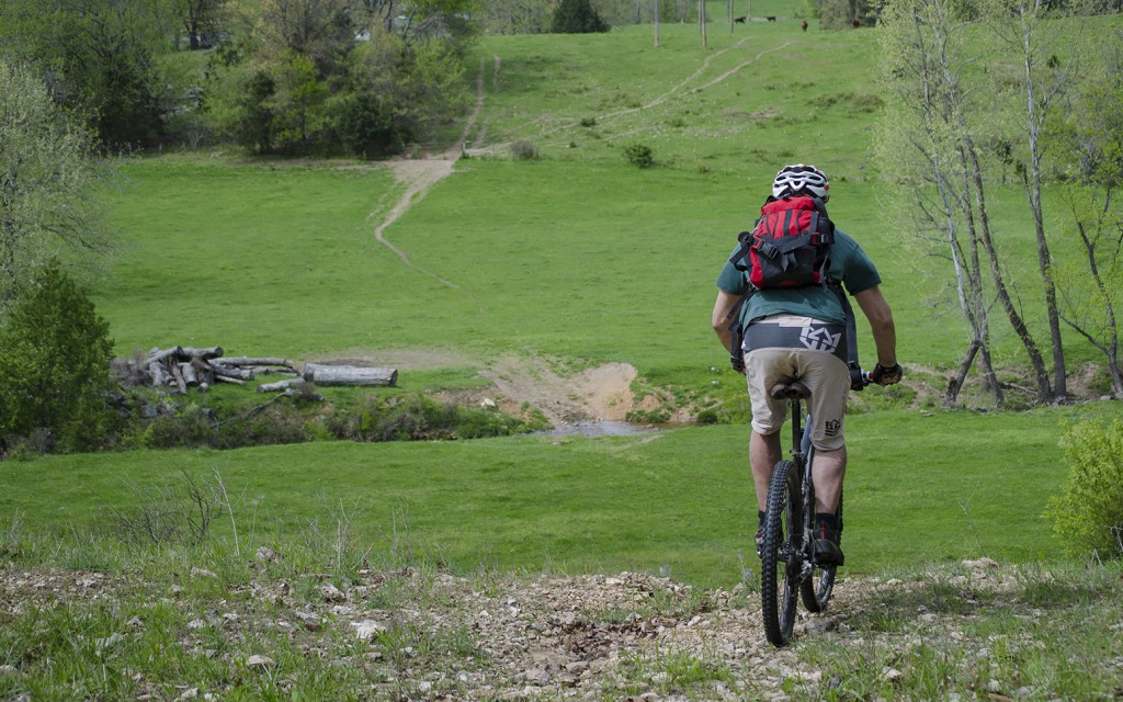 Aaron Codling rides a mountain bike through a cow pasture, image by Curtis Savard