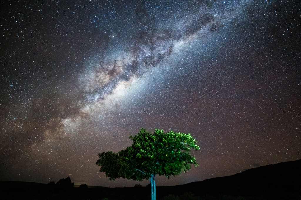 the milky way behind a tree