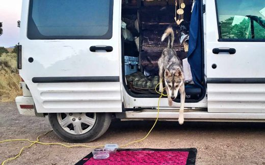 dog jumps out of van